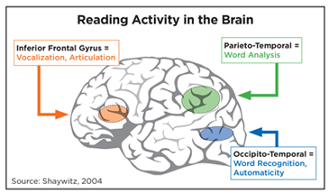 diagram of brain with reading activity areas highlighted